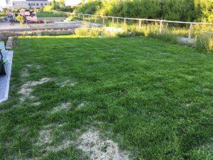 Rasen erstmals gemäht